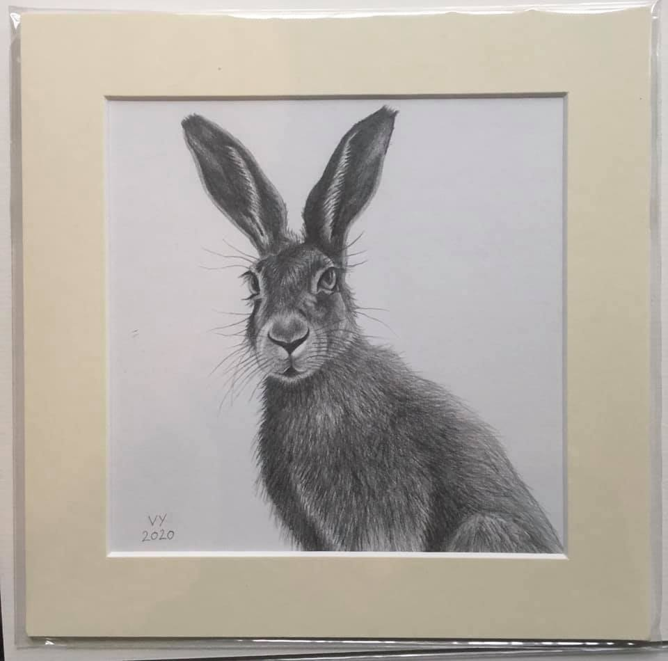 Pencil drawing of hare number one