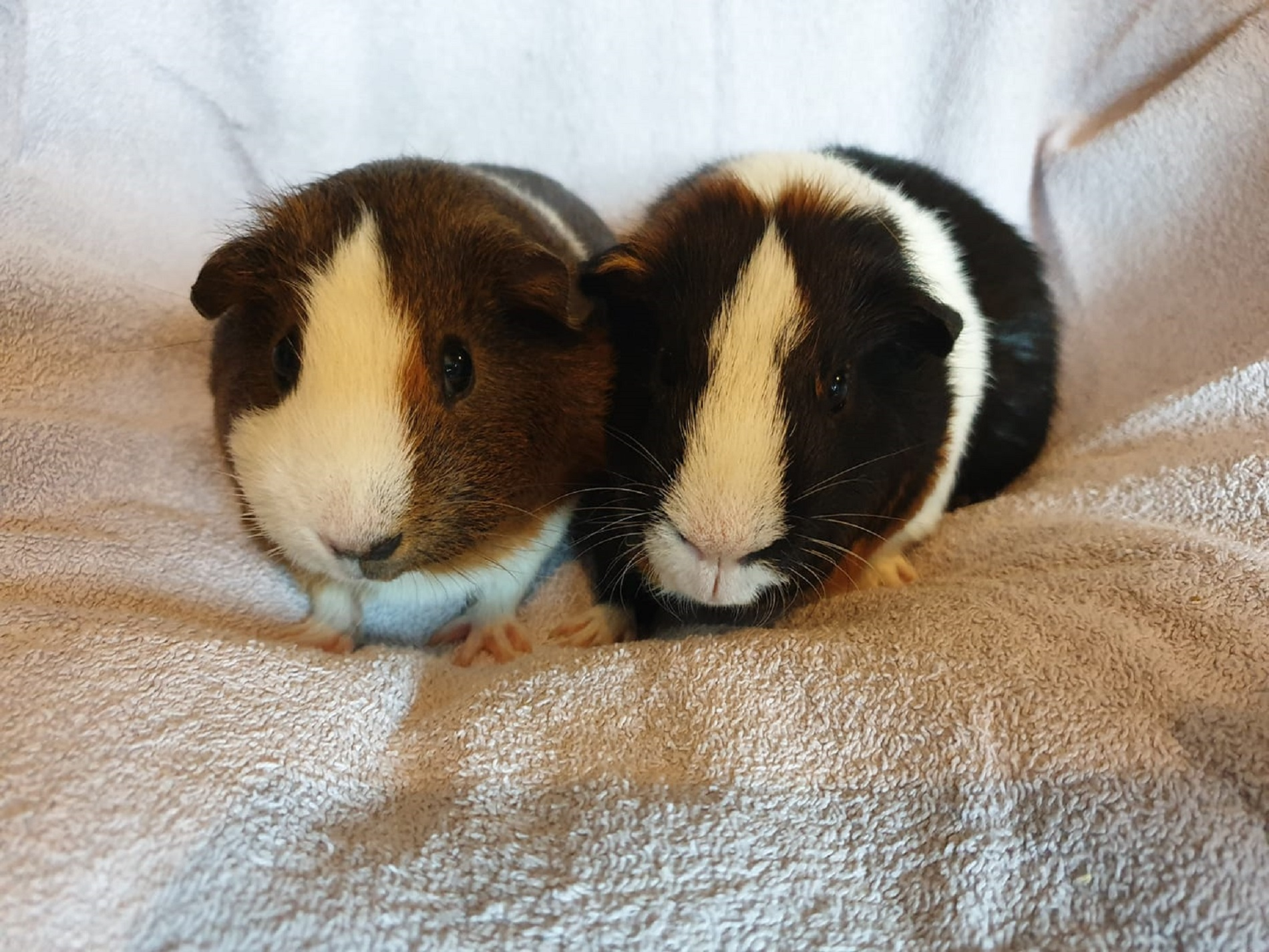 Peppa & Ronnie (Reserved)