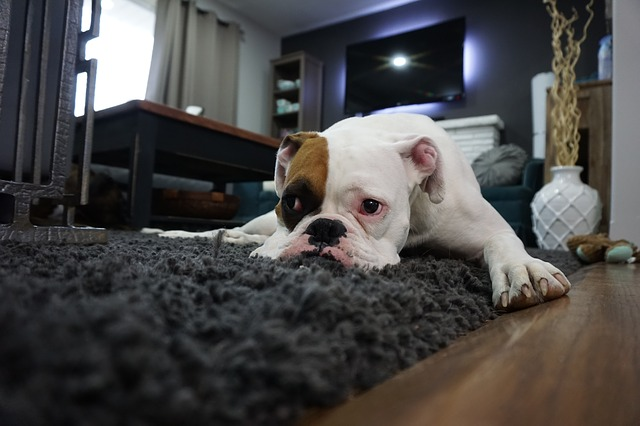 Does Your Pet Suffer From Separation Anxiety? Why Back To School Time Can Be A Trigger