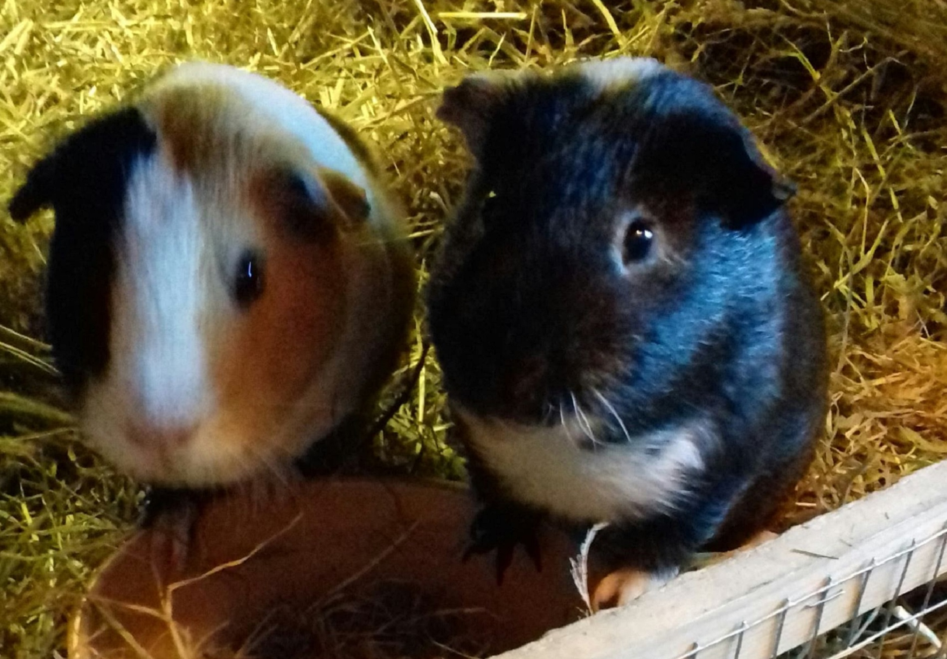 Cookie & Charlie (was Oreo) November 11th 2018