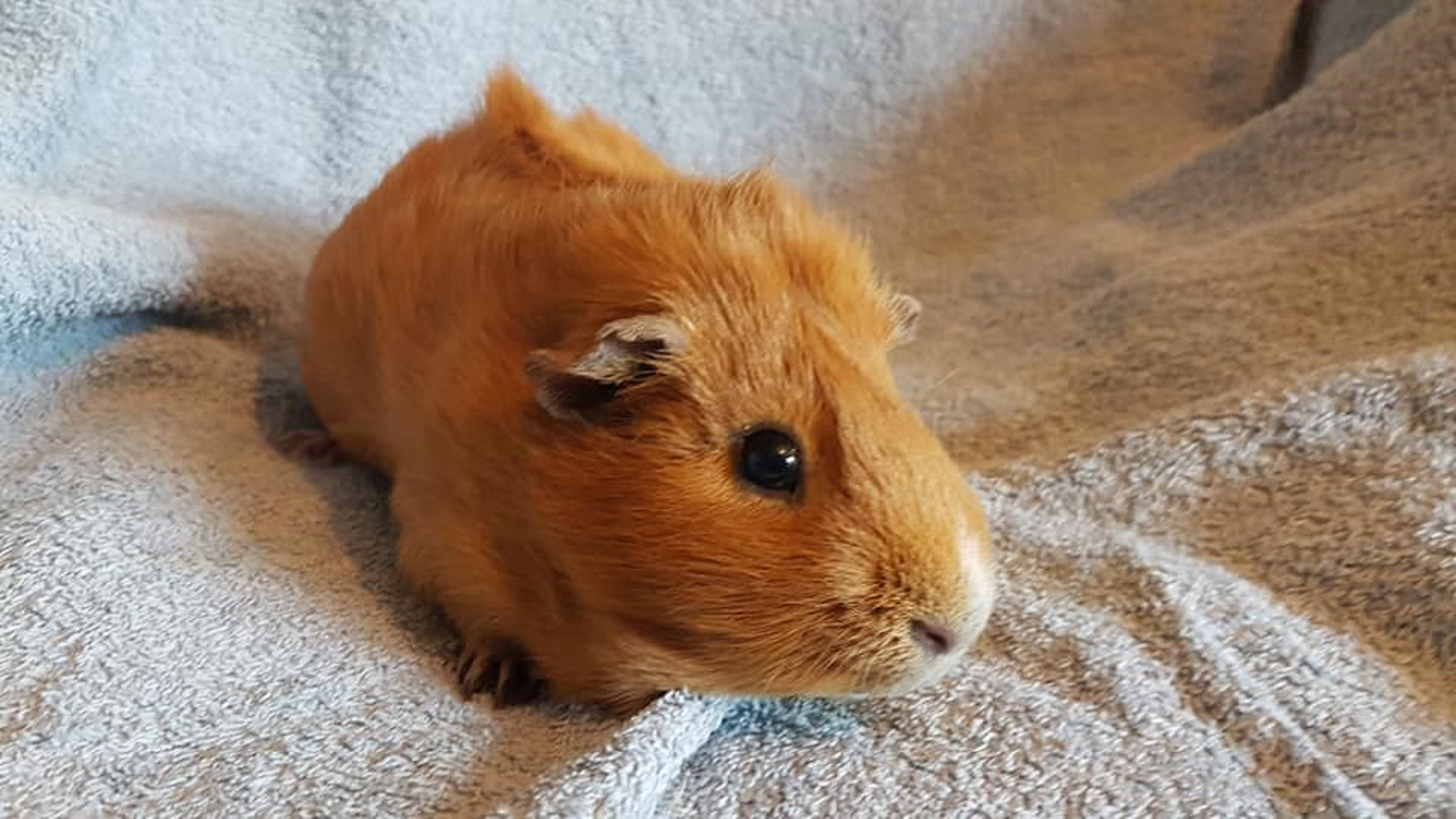 ERNIE (was GINGER) January 2016 to March 10th 2021