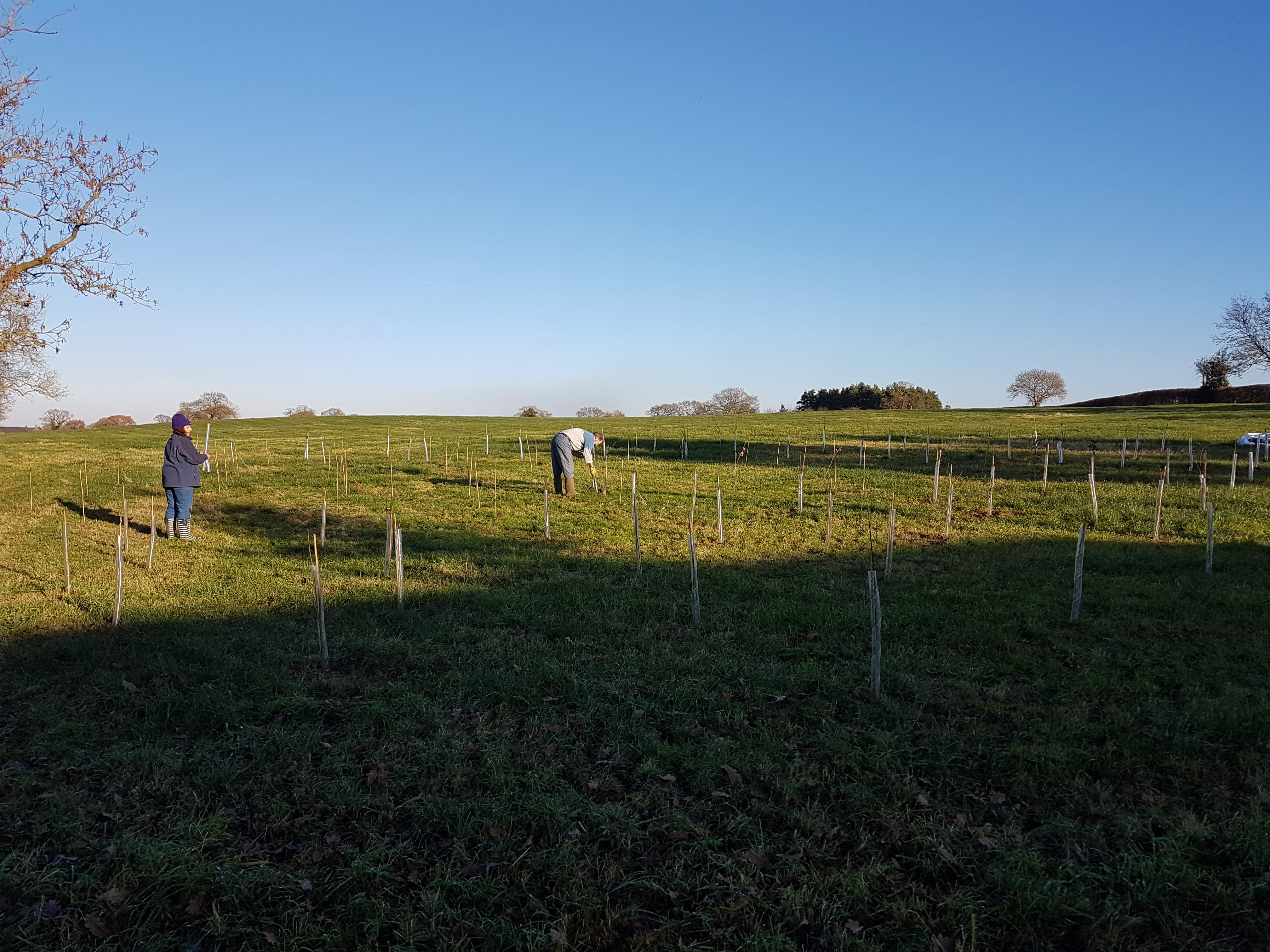 Tree Planting at Fenns Meadow Autumn 2019