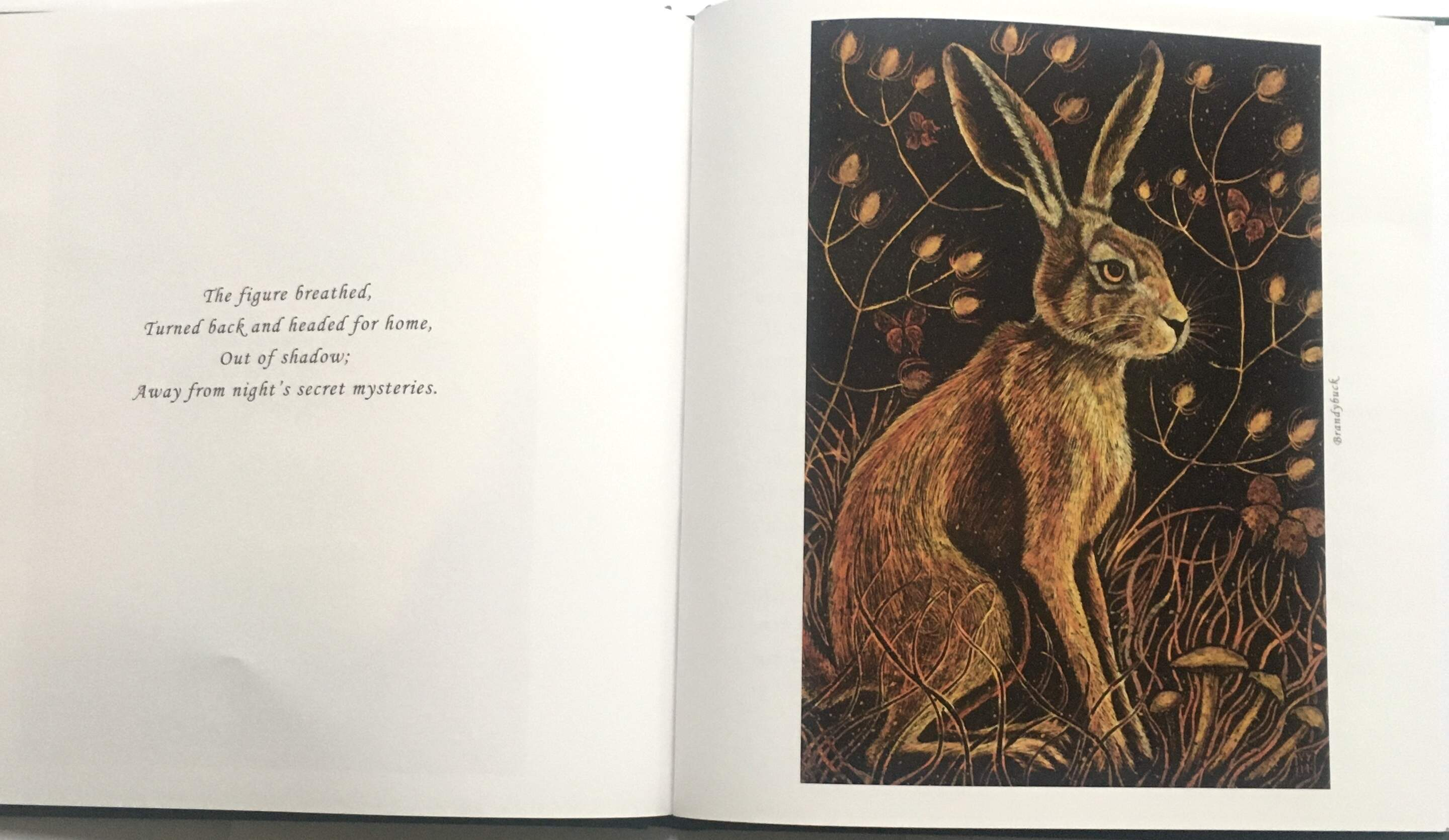 Hard back version of 'Mad March Hares'