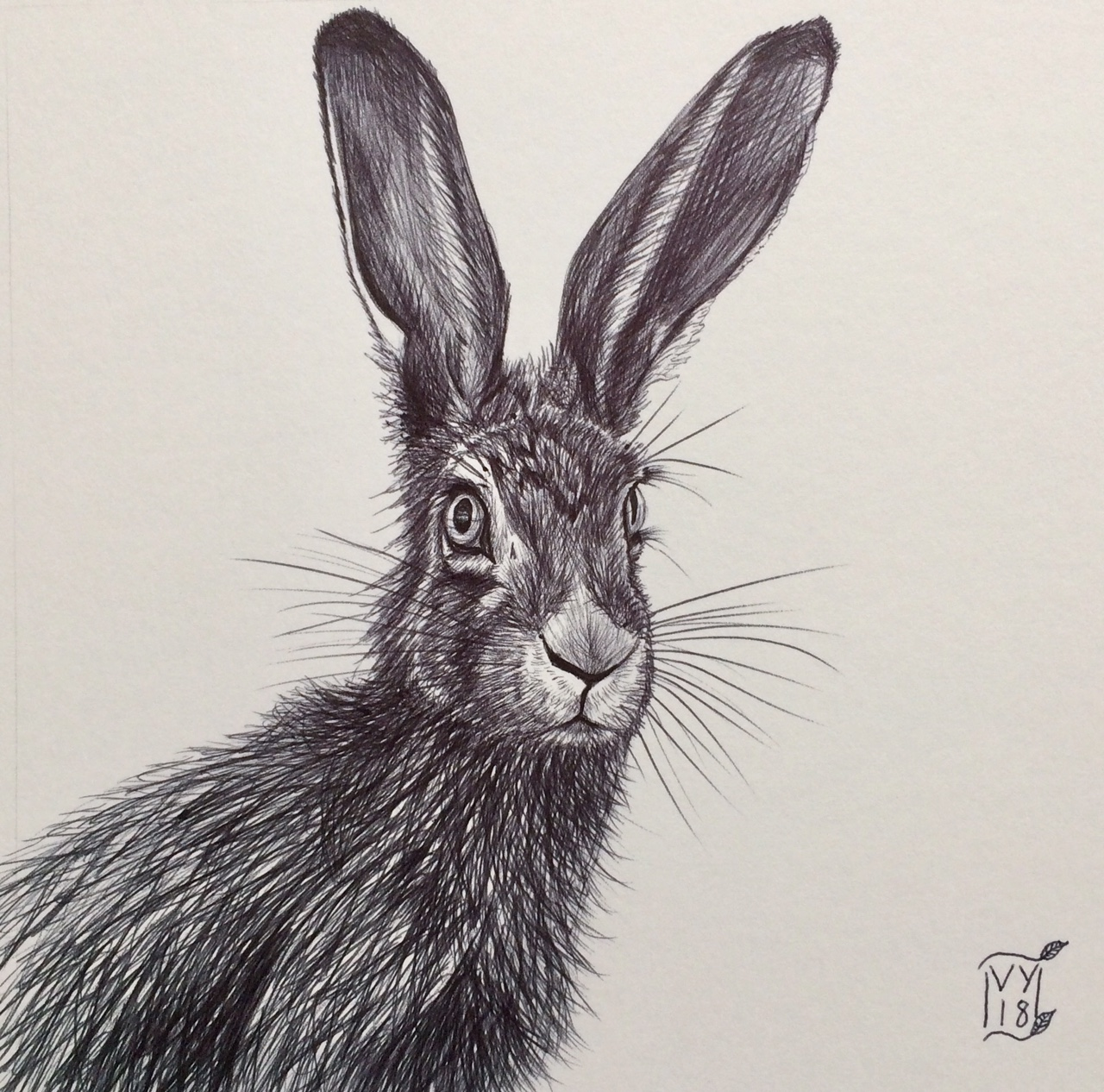 Hare drawing in biro