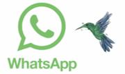 WhatsApp Colibripng