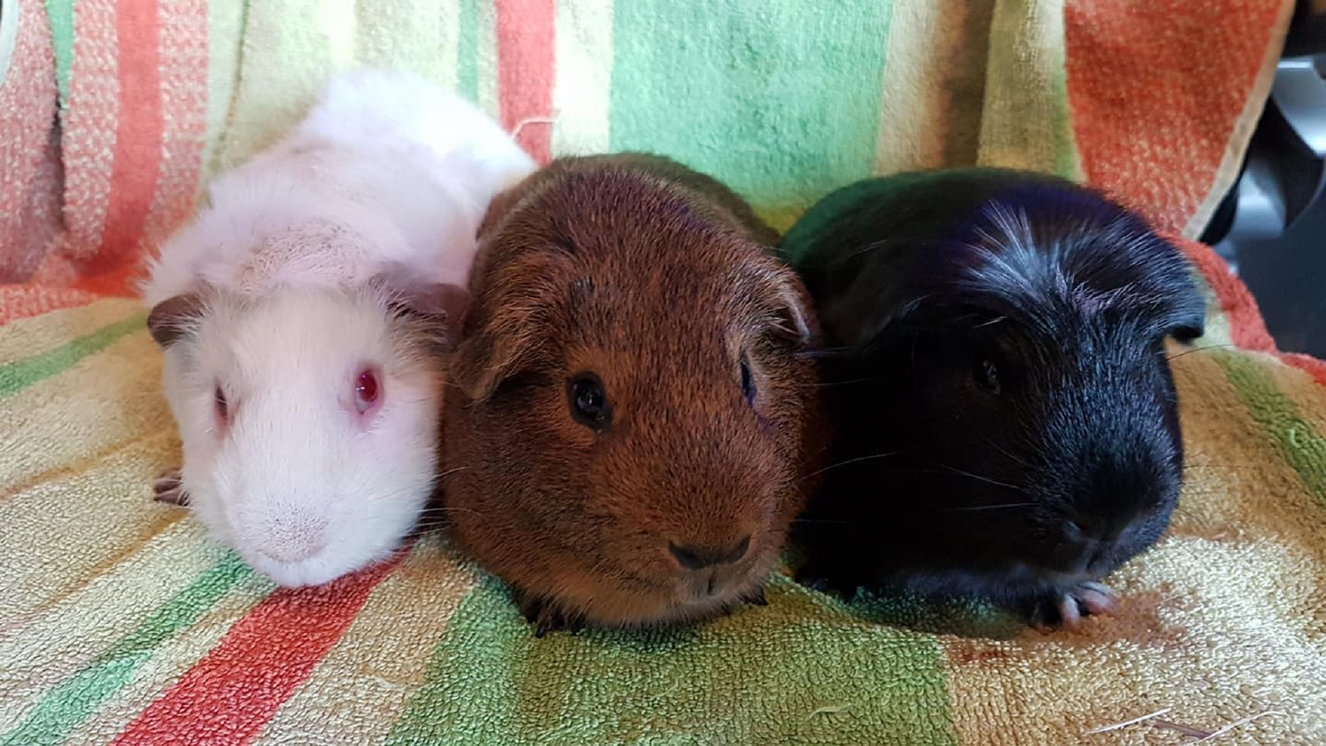 Casper, Spike & Snuggles October 1st 2018