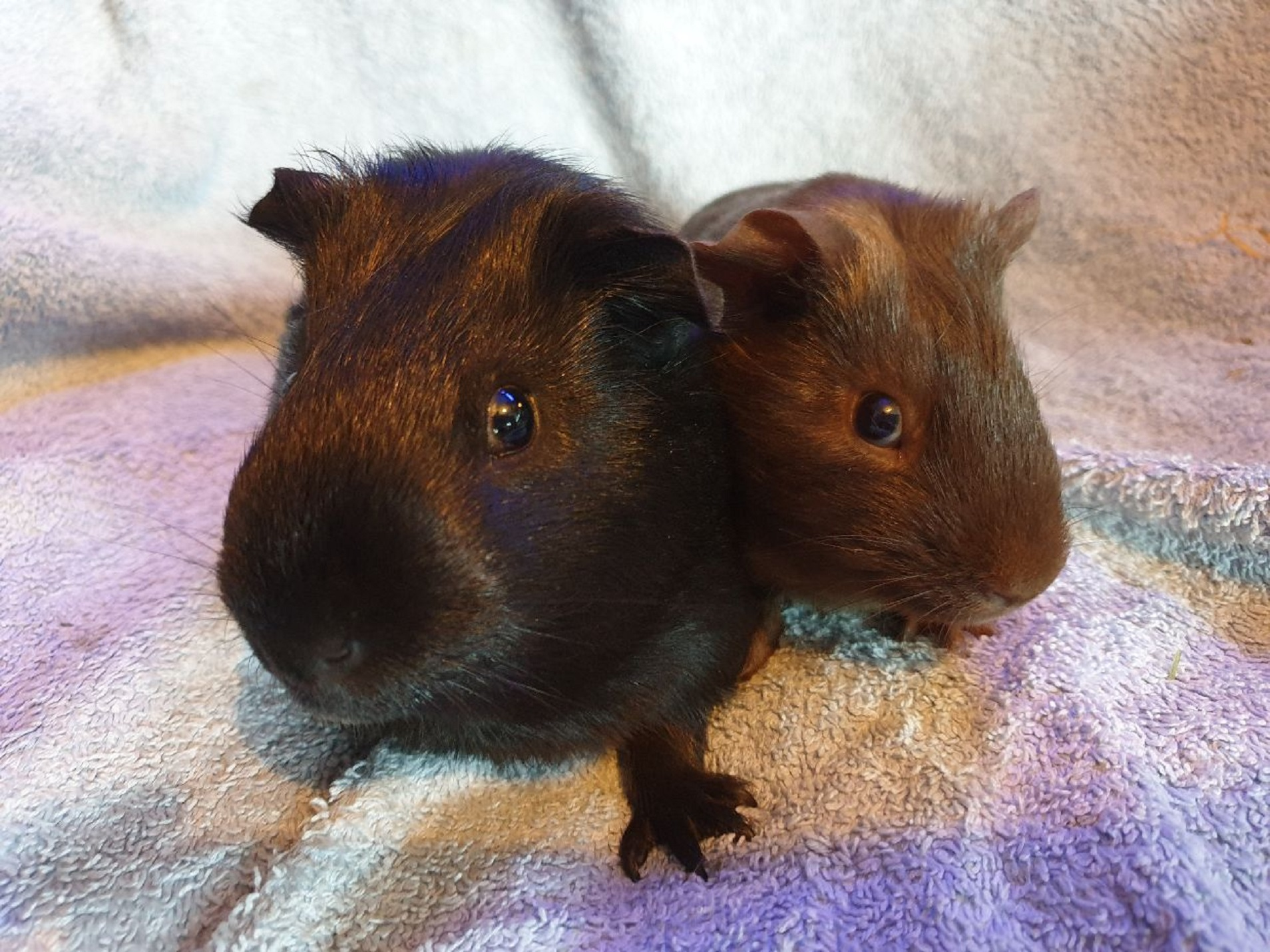 Sprinkles (Thunder) & Kevin (Chocolate) 26/7/20