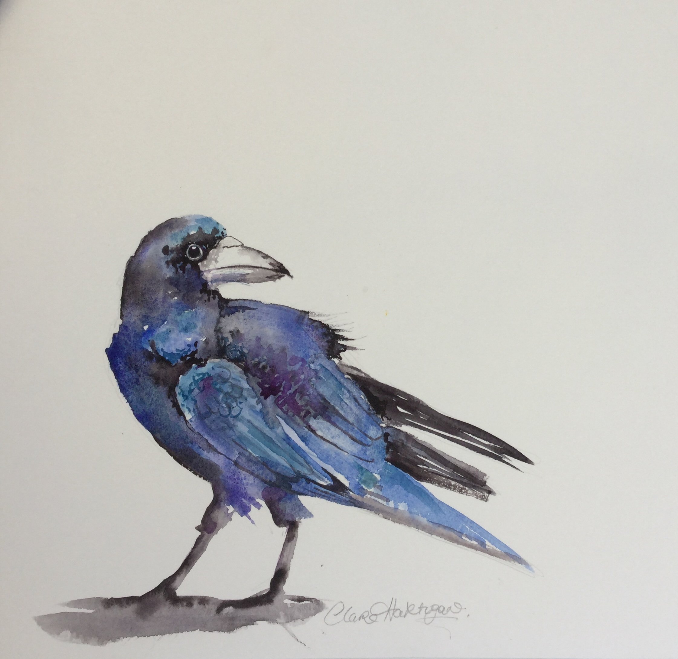 The Ruffled Rook