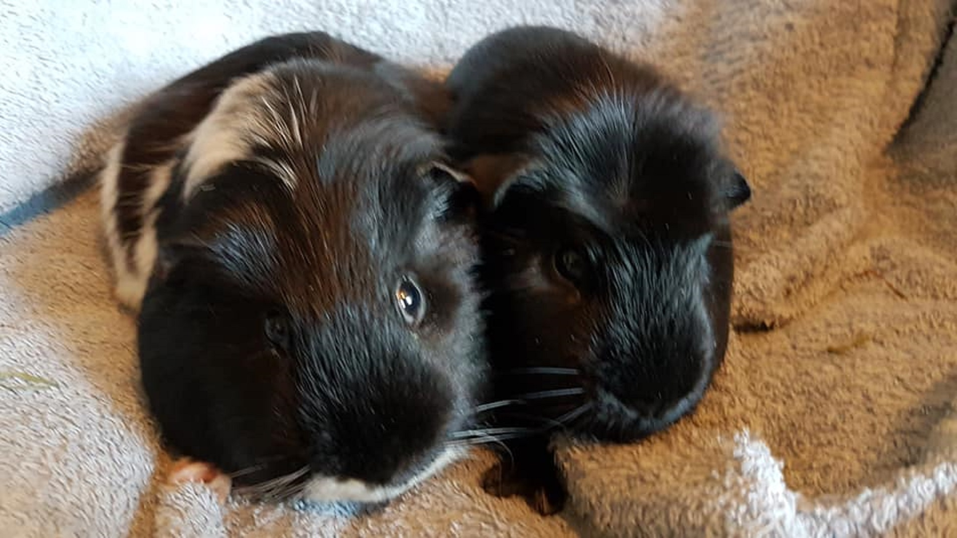 Frankie & Vinnie (Hagrid  & Sirius) Feb 17th 2019