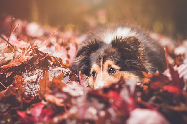 Keeping your pet safe in Autumn