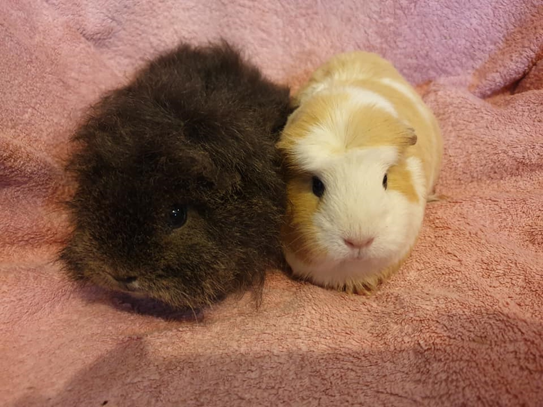 Fluffy & Pearl October 20th 2019