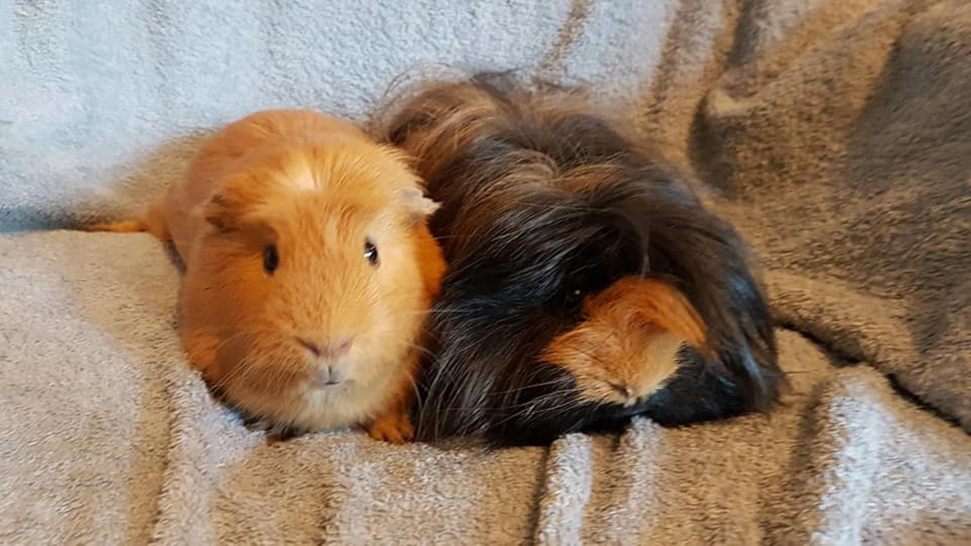 Ginger & Furball April 12th 2019