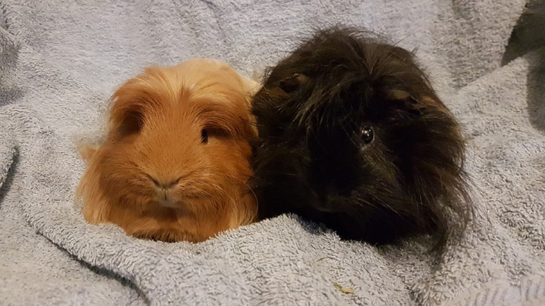 COCO & SOOTY April 1st 2019