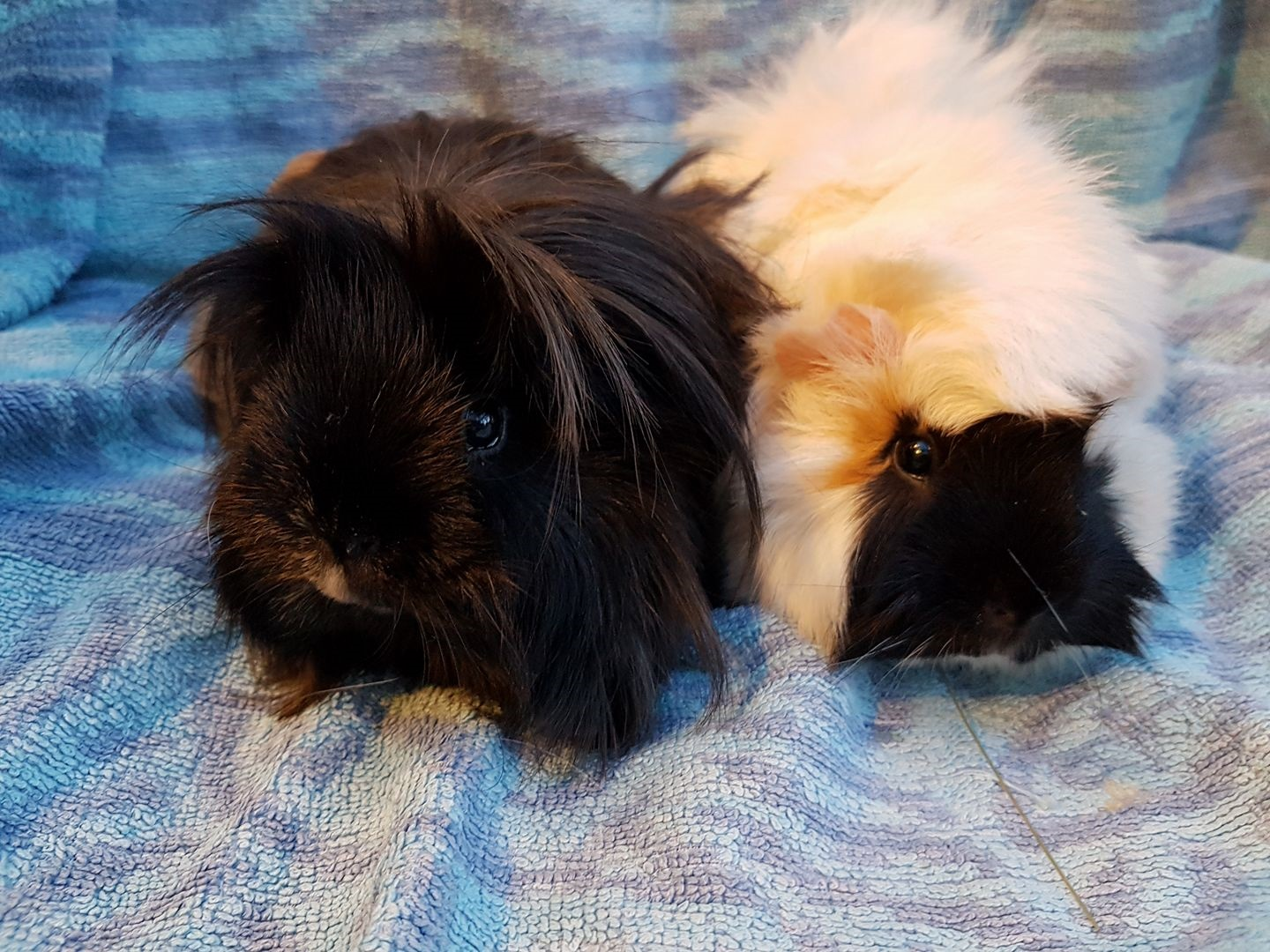Penelope & Pippins April 21st 2018