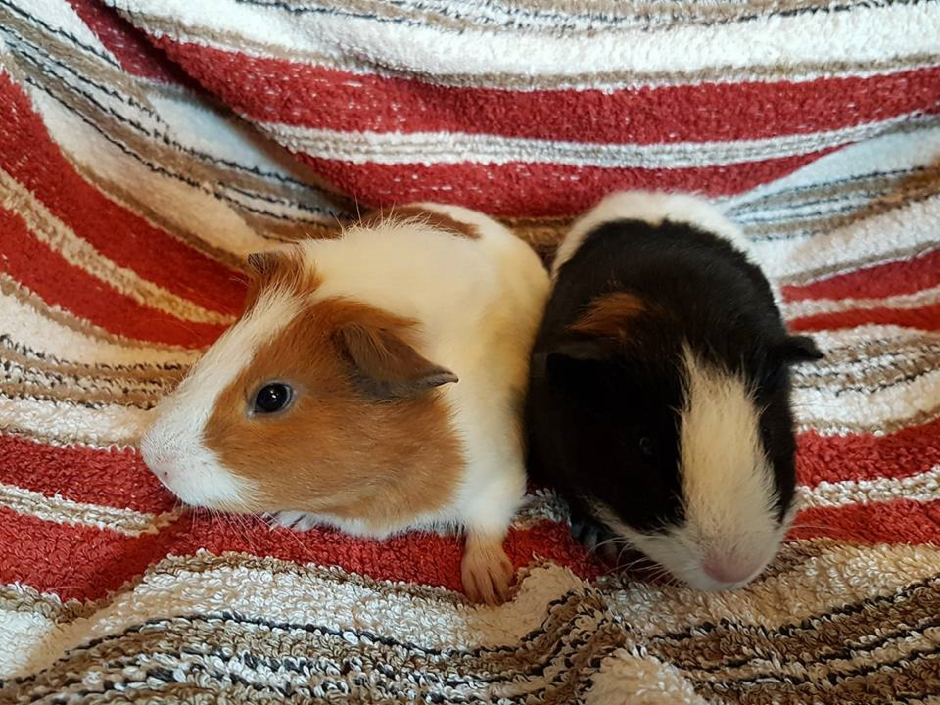 Darcy & Narcy (Ginger Nut & Little Panda) 1/4/17