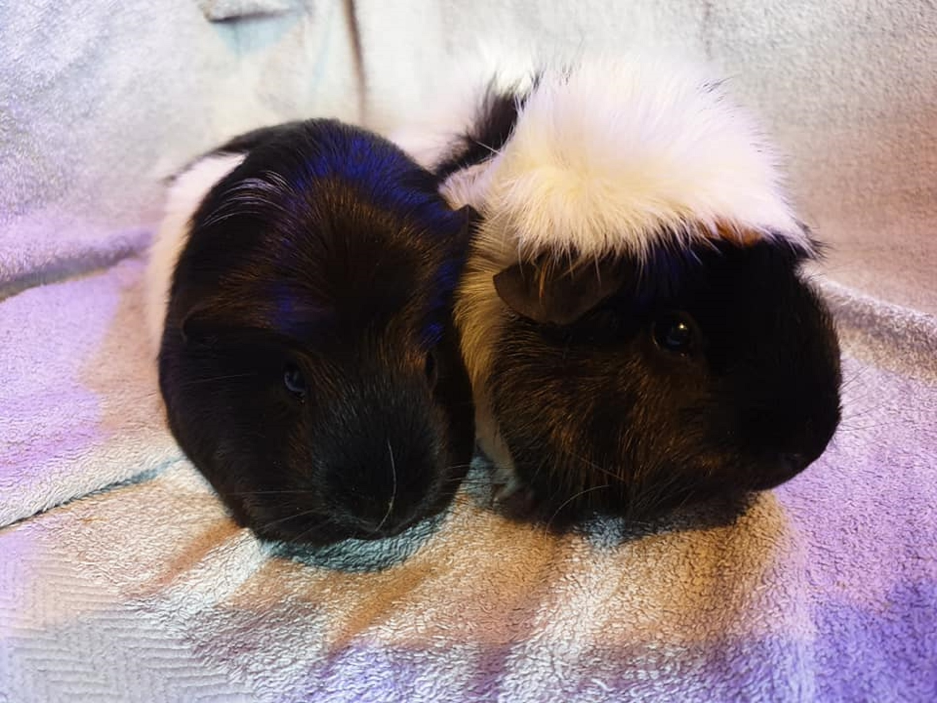 Oreo & Biscuit October 4th 2019