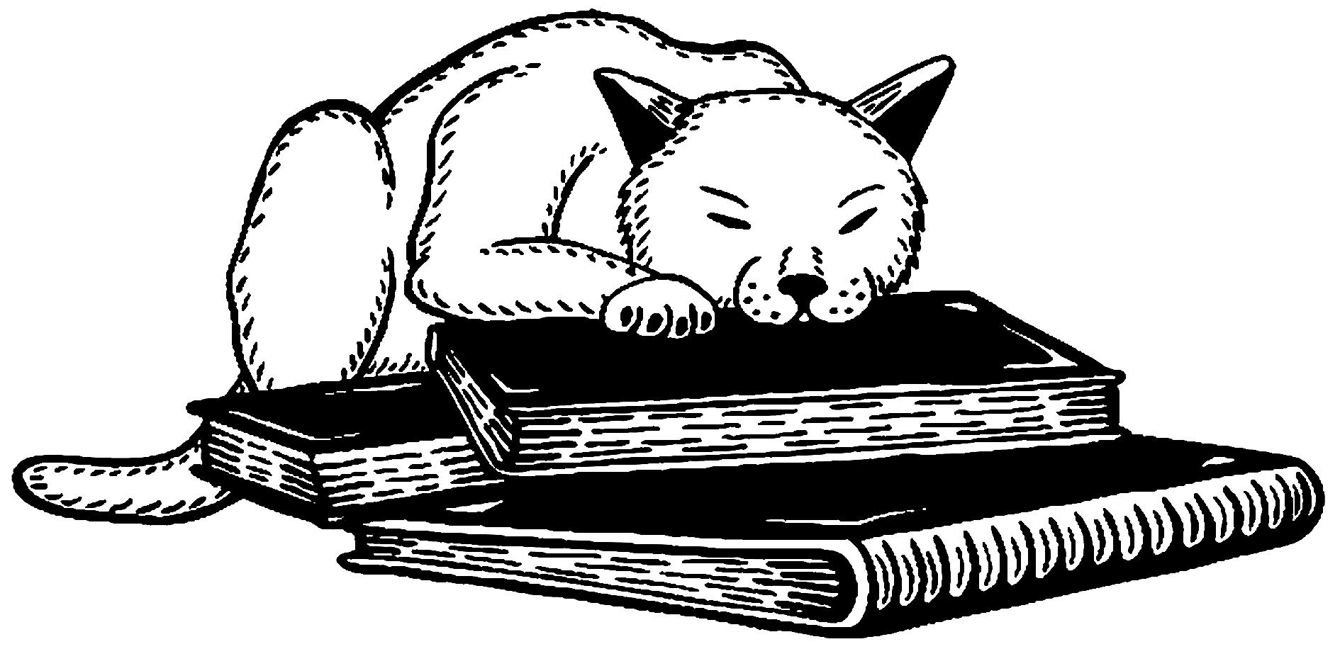 Puss In Books Illustration - Jenny Bommert