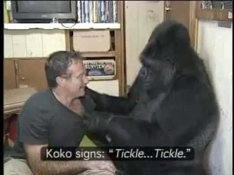 Koko the Gorilla and Robin Williams
