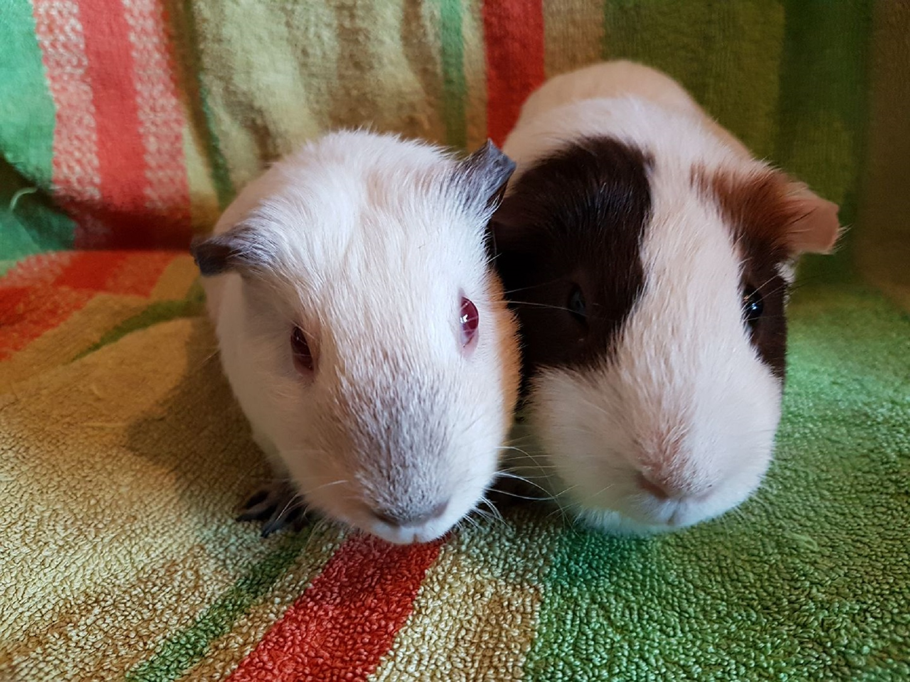 Pig & Chives (were Milly & Molly) March 5th 2018