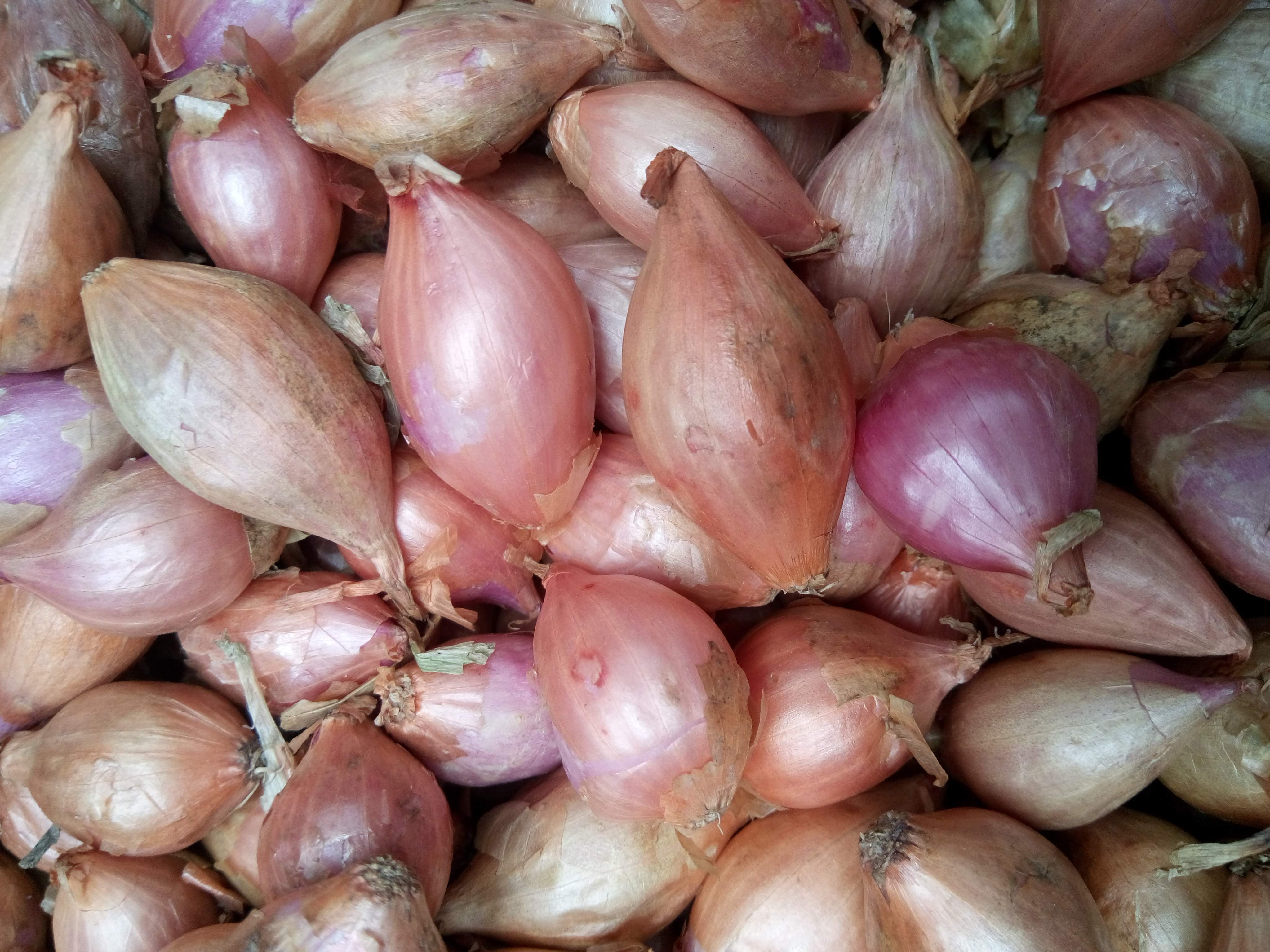 ROSCOFF ONION SETS - 250g  (approx 50 sets) Pre-order. See description for details of dispatch