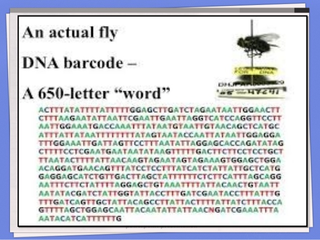 use-of-dna-barcoding-in-insecttaxonomy-13-638jpg