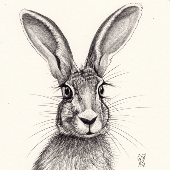 Hare with Eyelashes pencil