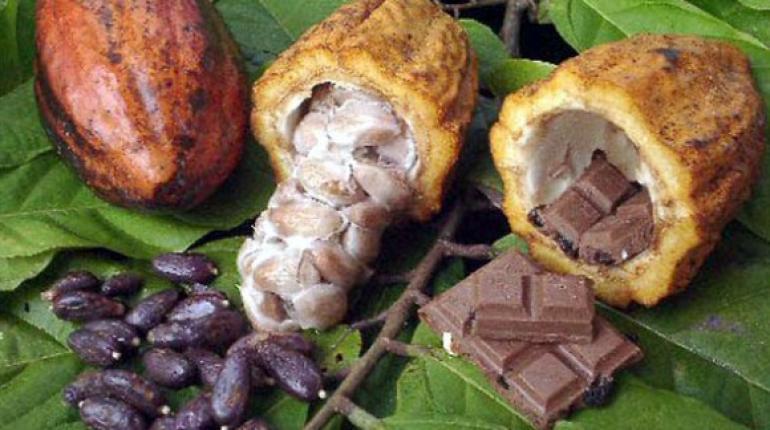 Cacao y Anandaminasjpg
