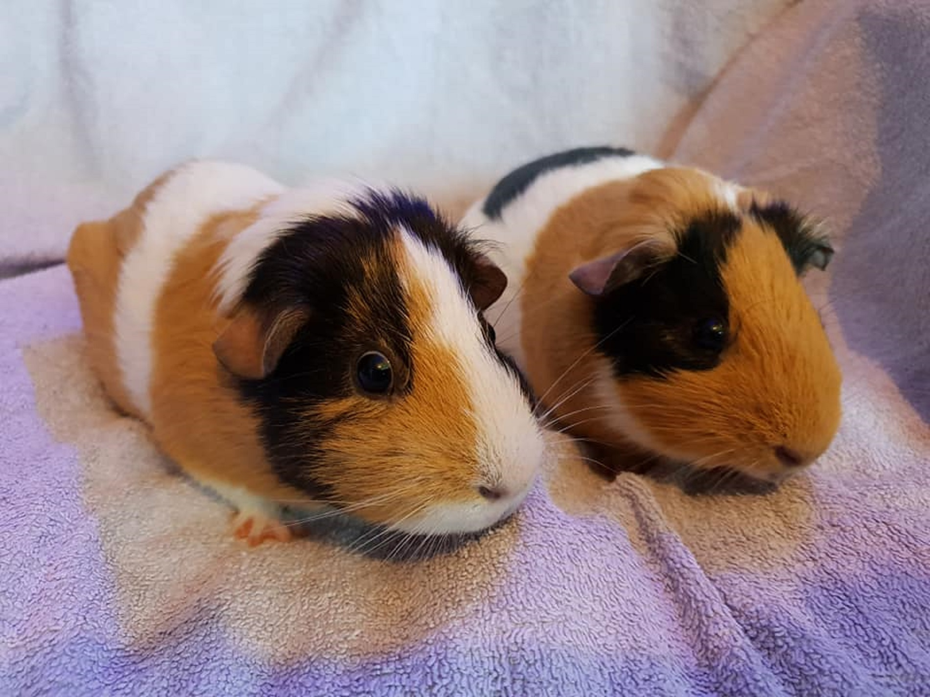 Fudge & Toffee August 11th 2019