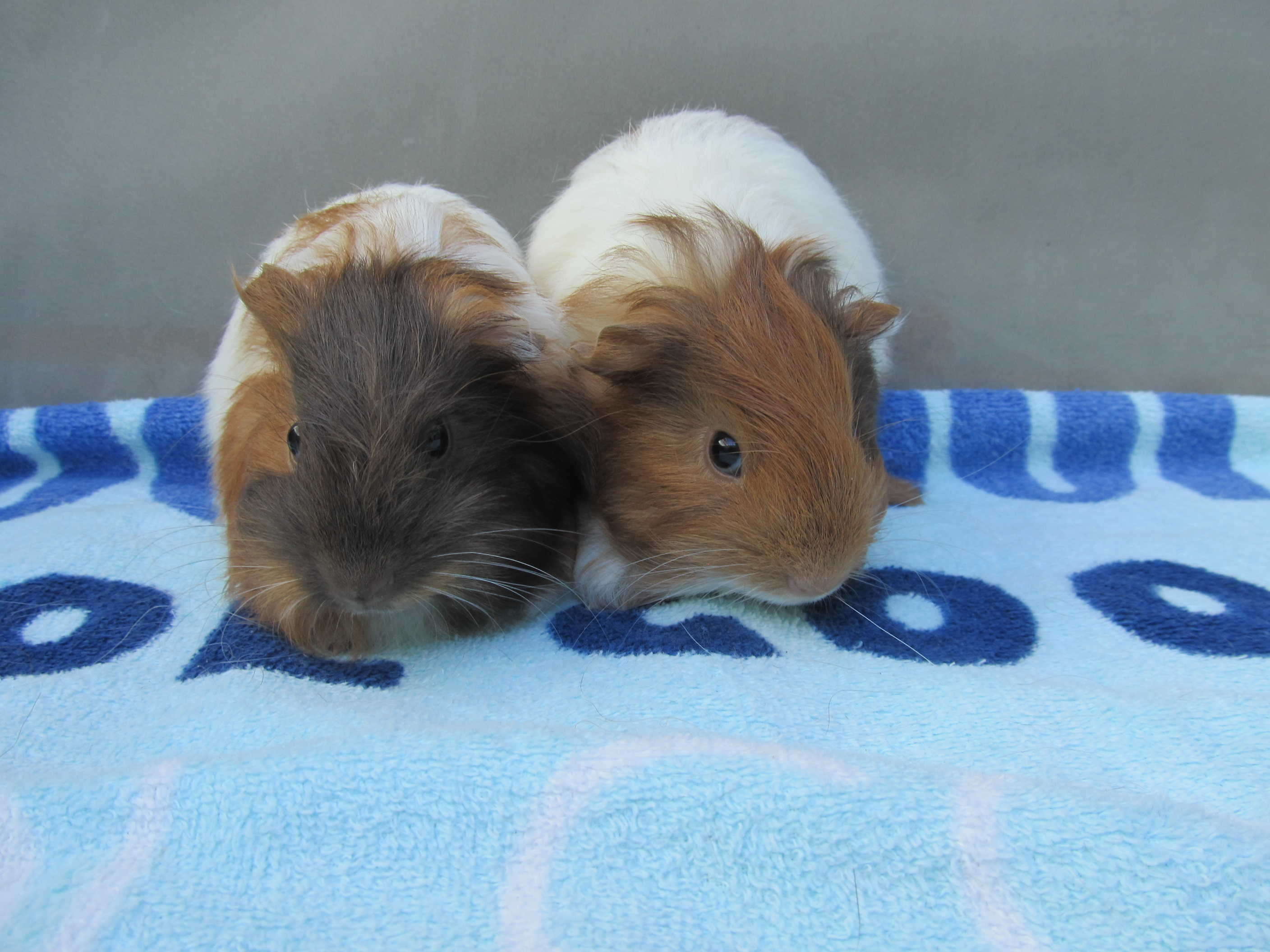 Coco & Caramel (were Pickles & Piper) Sept 24 2015