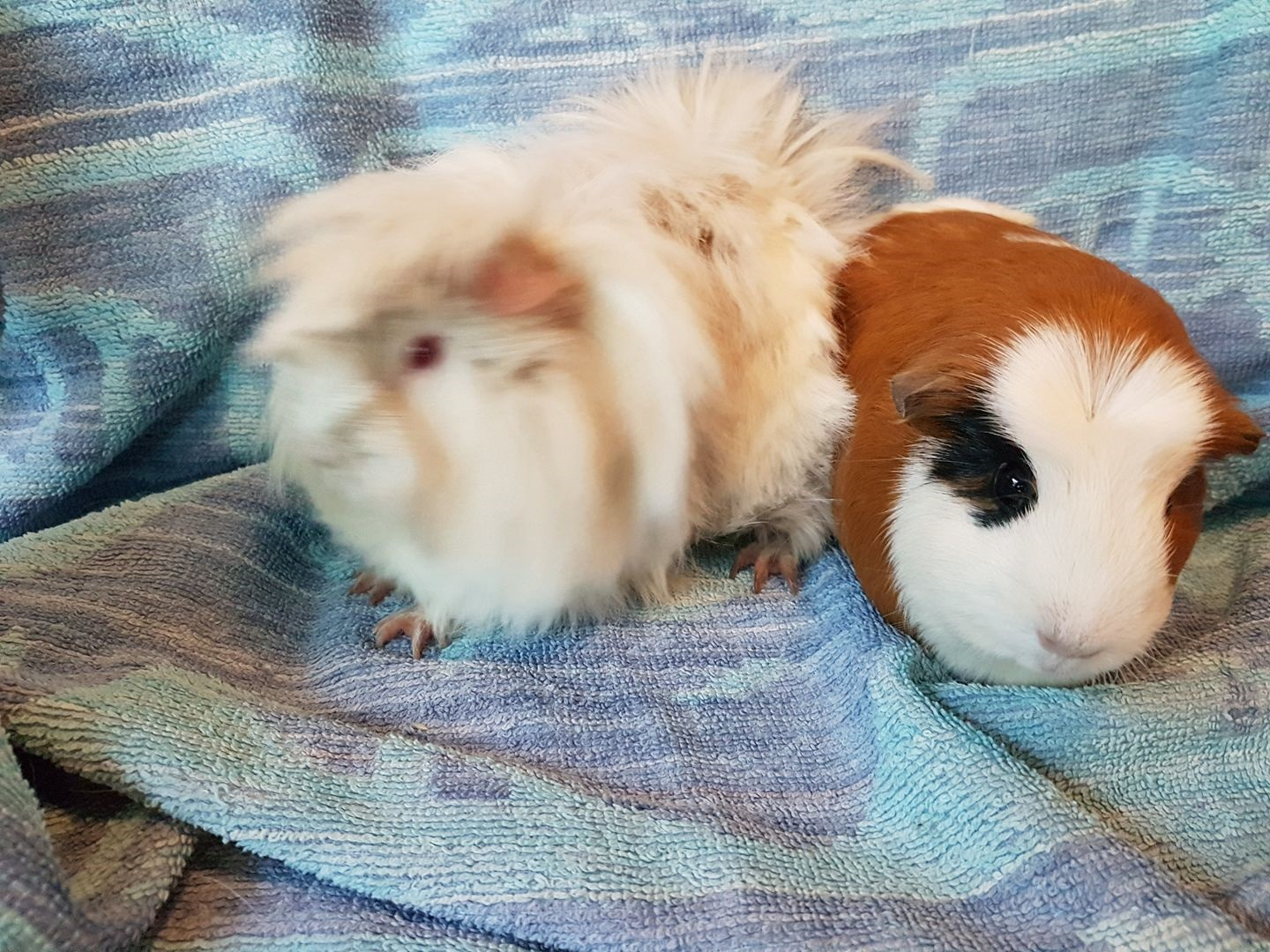 Sausage & Mash (was Daisy & Poppy) Jan 12th 2018