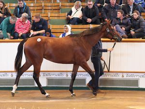 Records Galore At Book 1 Of The Tattersalls October Yearling Sale
