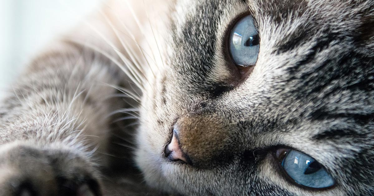 Feline Handling and Behaviour CPD; Reducing Patient Stress in a Clinical Environment.
