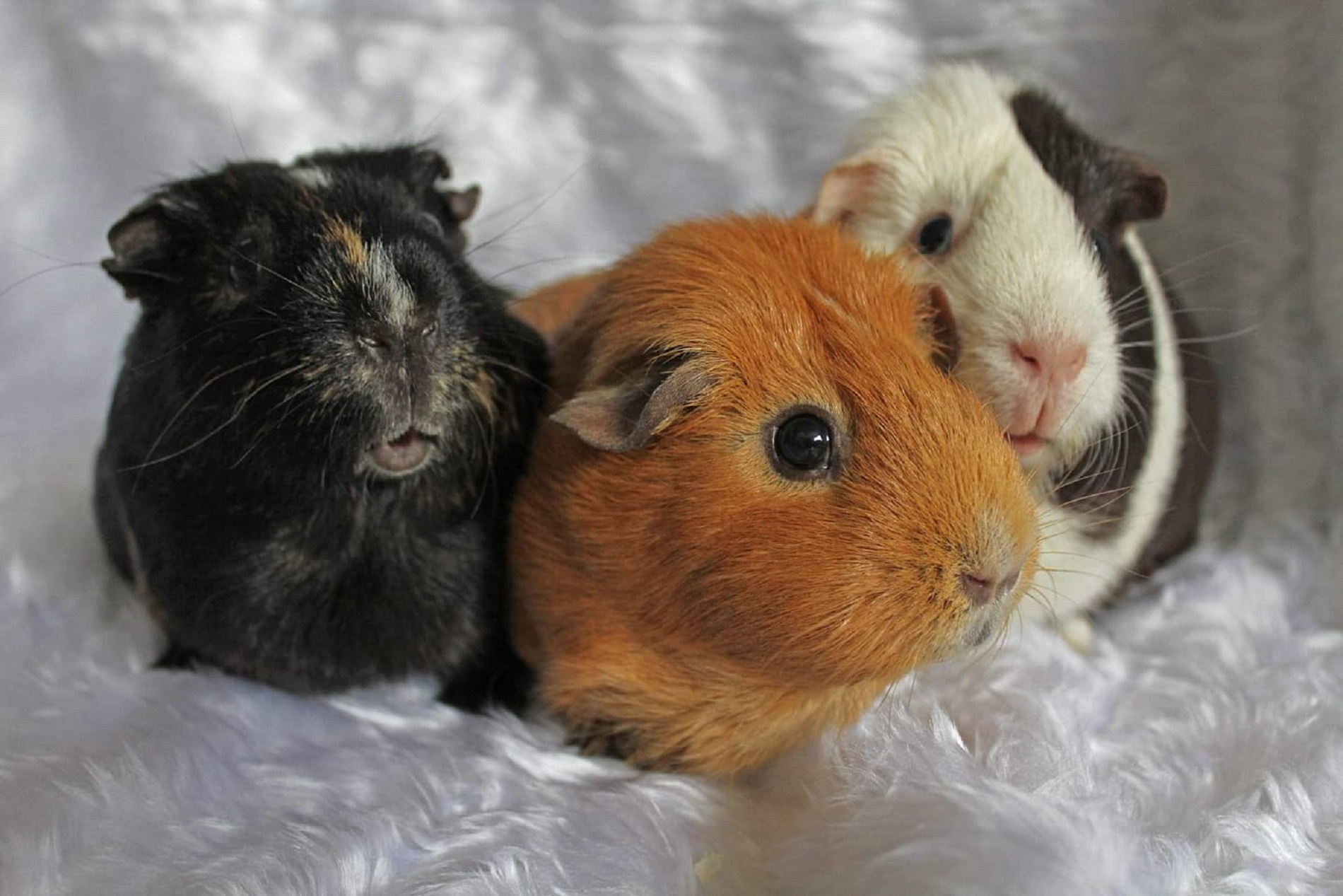 Parsley (April 2014), Ginny & Hermione (Sept 2015)