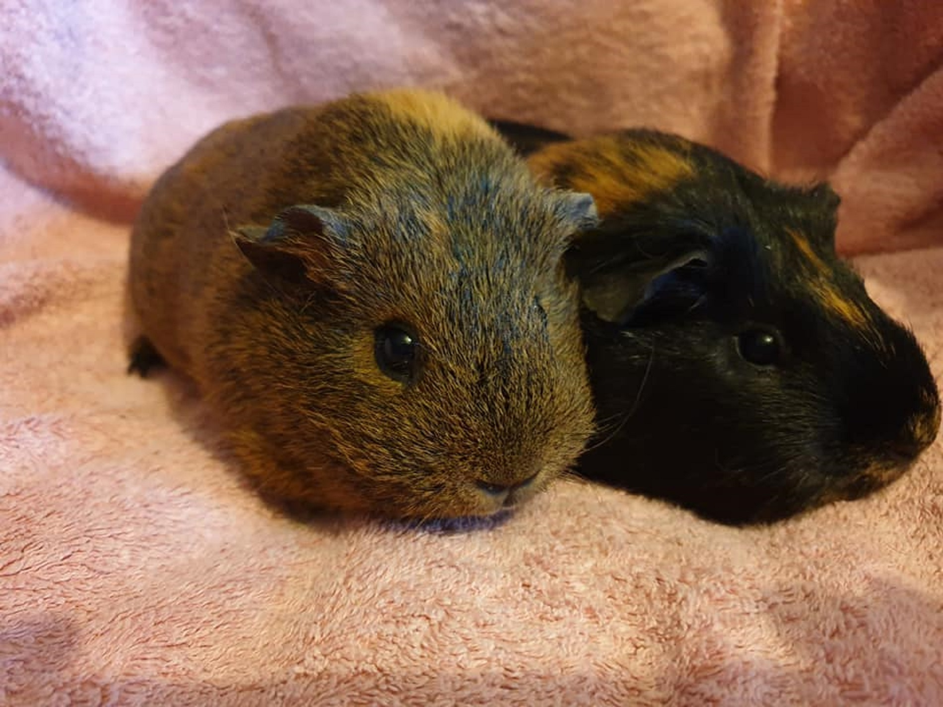 Milly & Winnie December 15th 2019