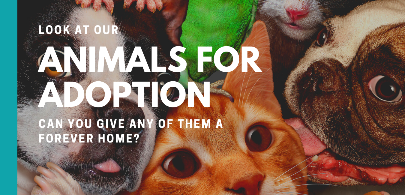Look at the animals in our care that are available for adoption