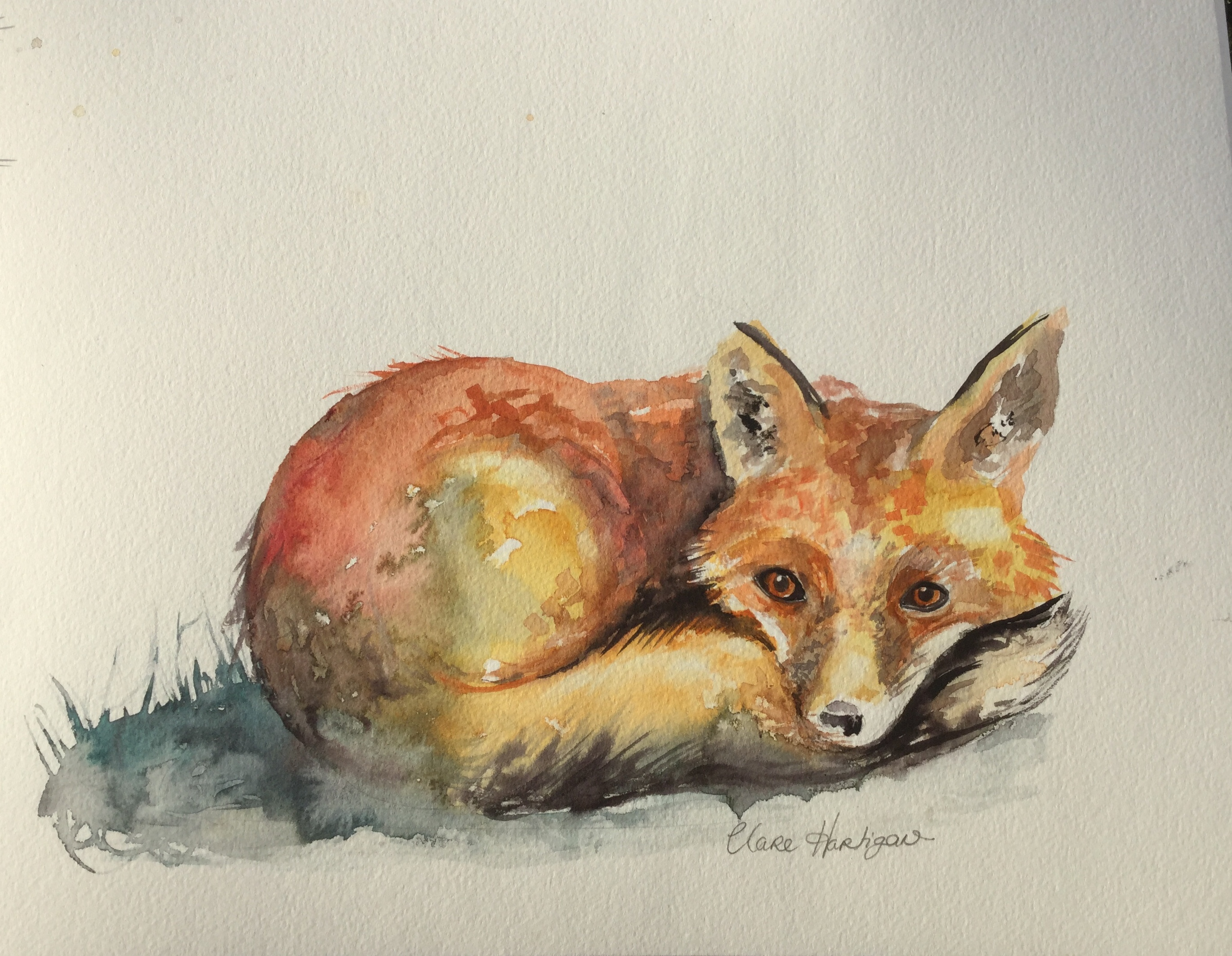The Young Fox