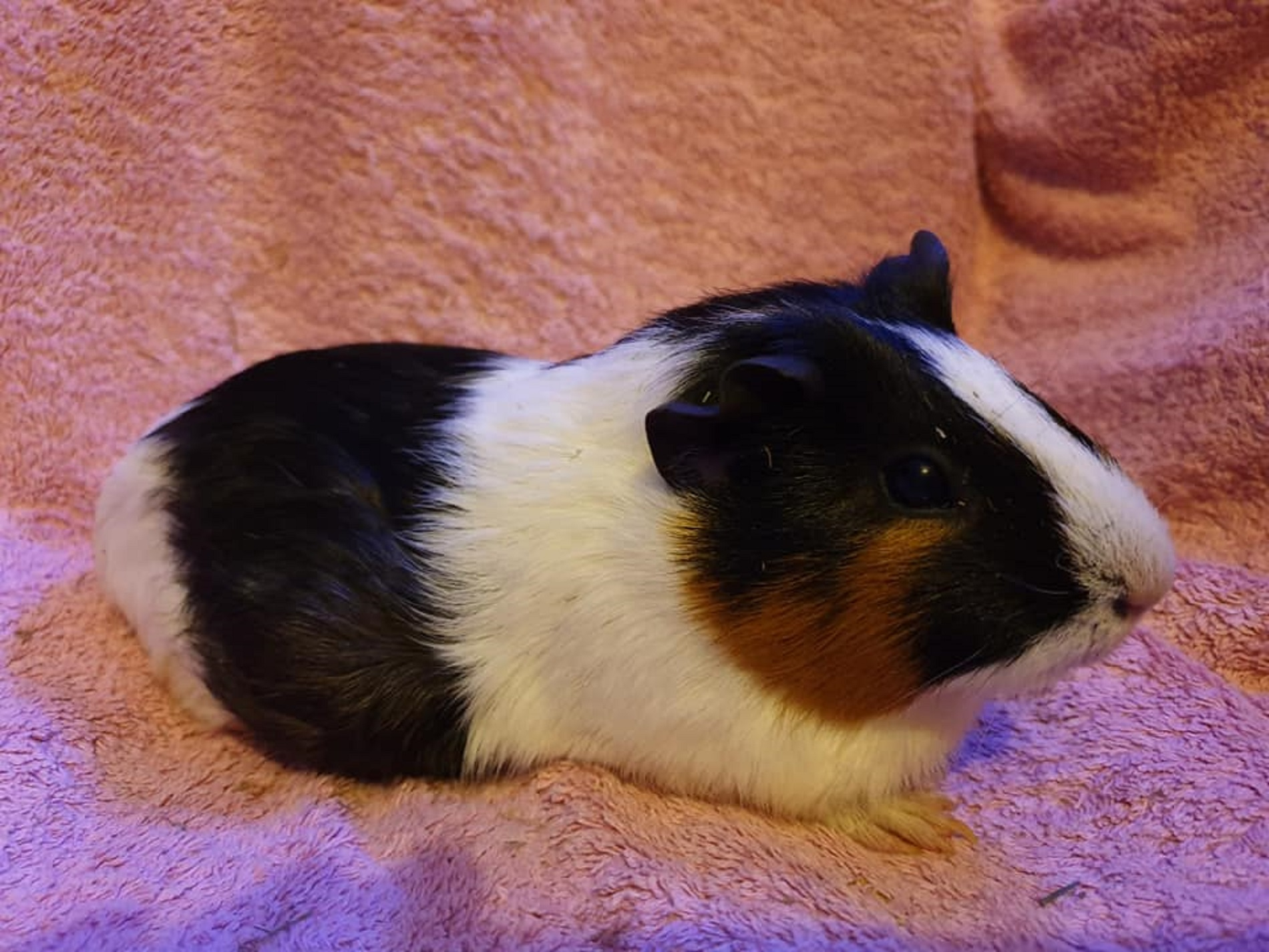 Florence (was Millie/Oreo) November 1st 2019