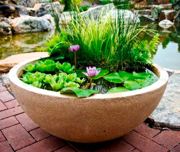 pond in a pot.jpg