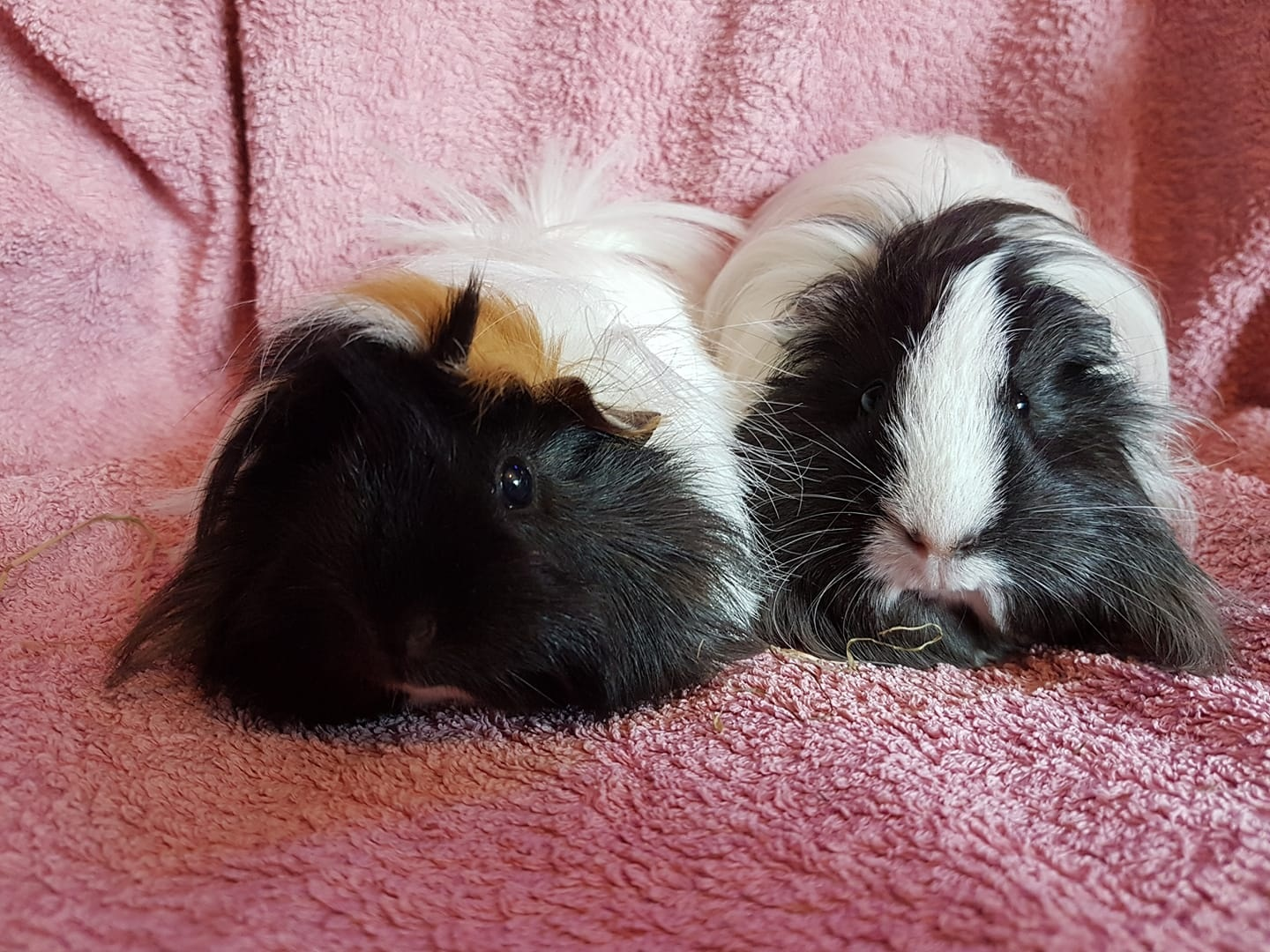 Sandwich &  Cotton (Lenny & Lou Lou)June 25th 2018