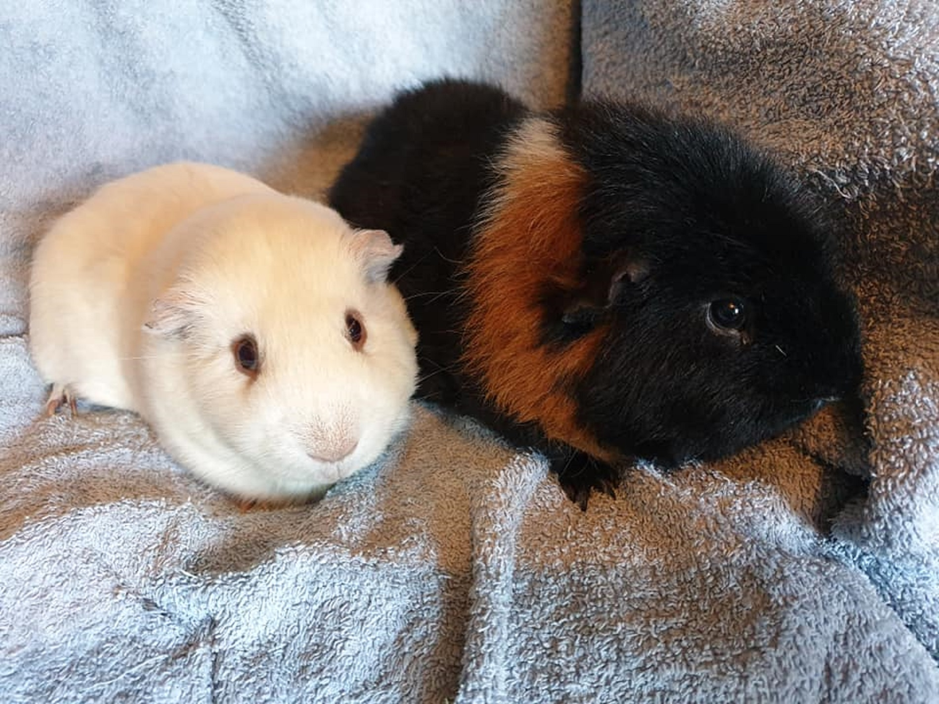 Marvin & Teddy (Reserved)
