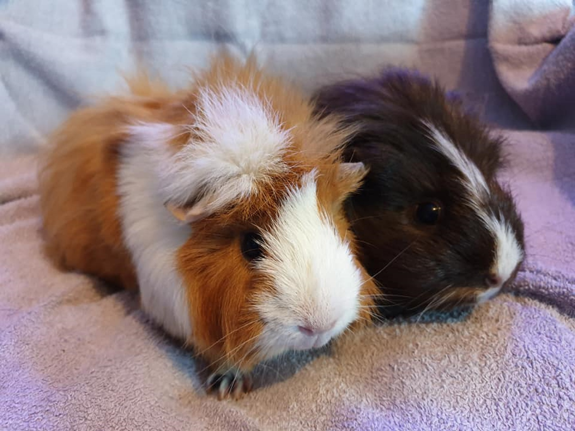 Caramel & Malteser September 20th 2019