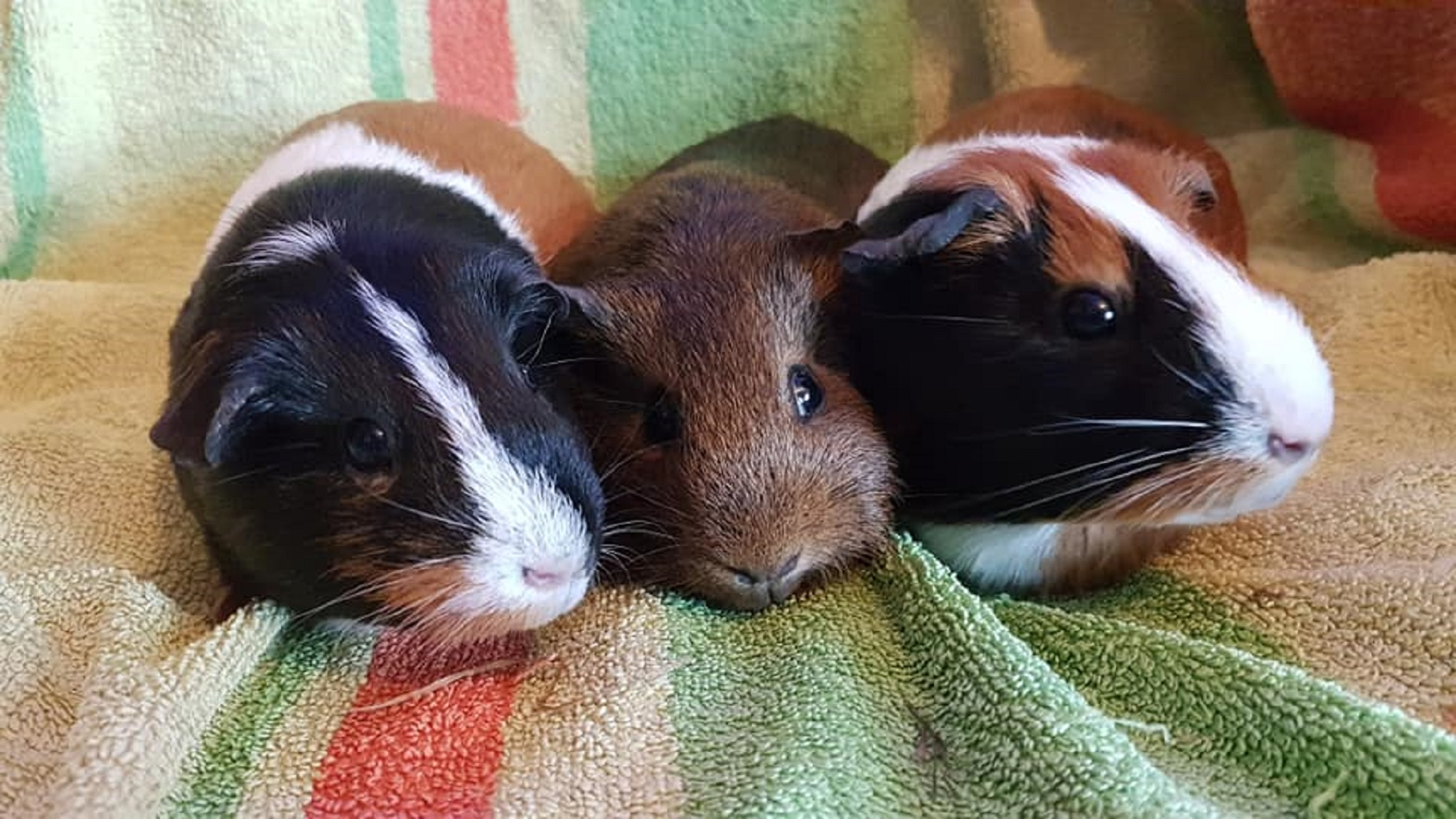 Mini, Cocoa & Princess August 31st 2018