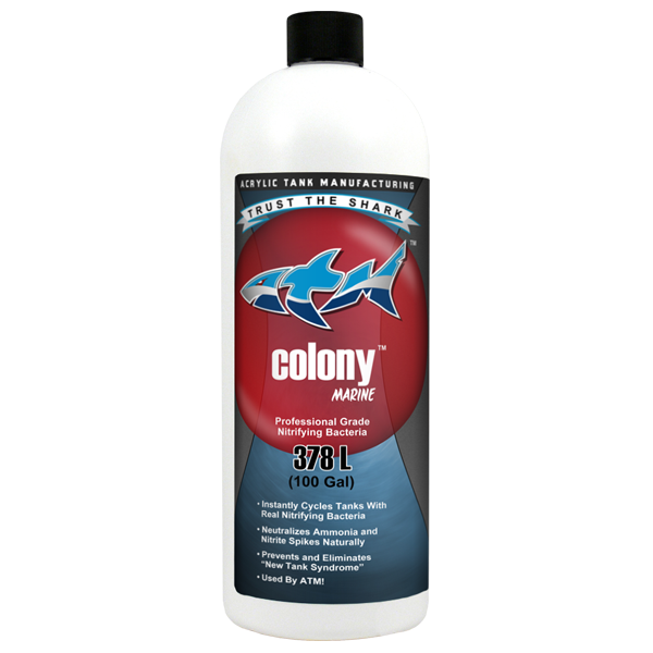 Colony Nitrifying Bacteria Saltwater