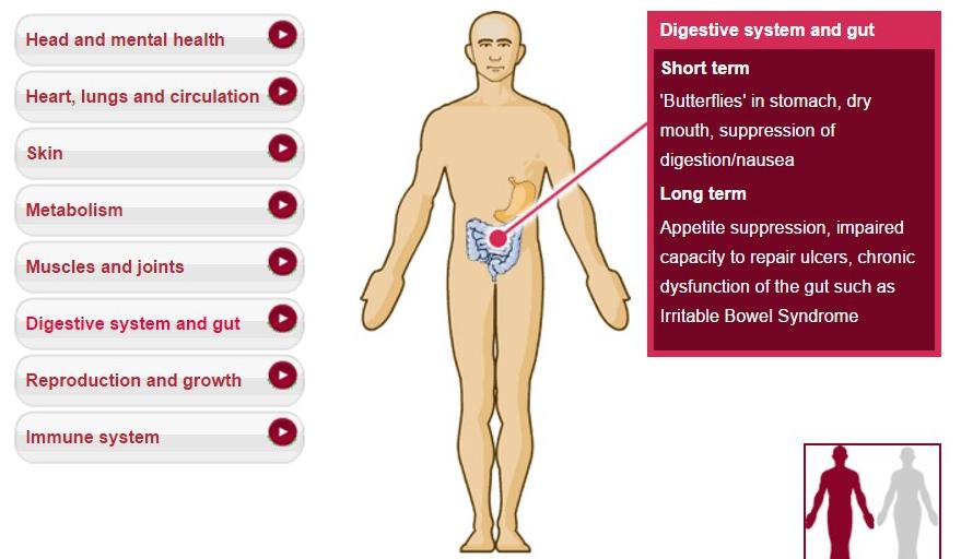 digestion.jpg