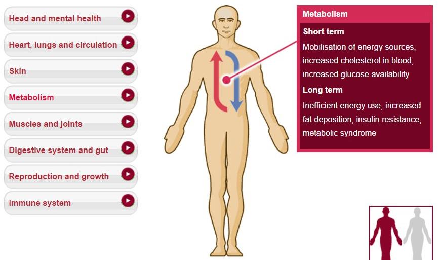 metabolism_1.jpg