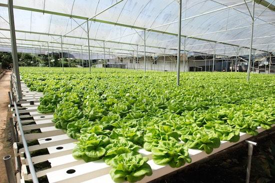 Costruzione serre per verdura