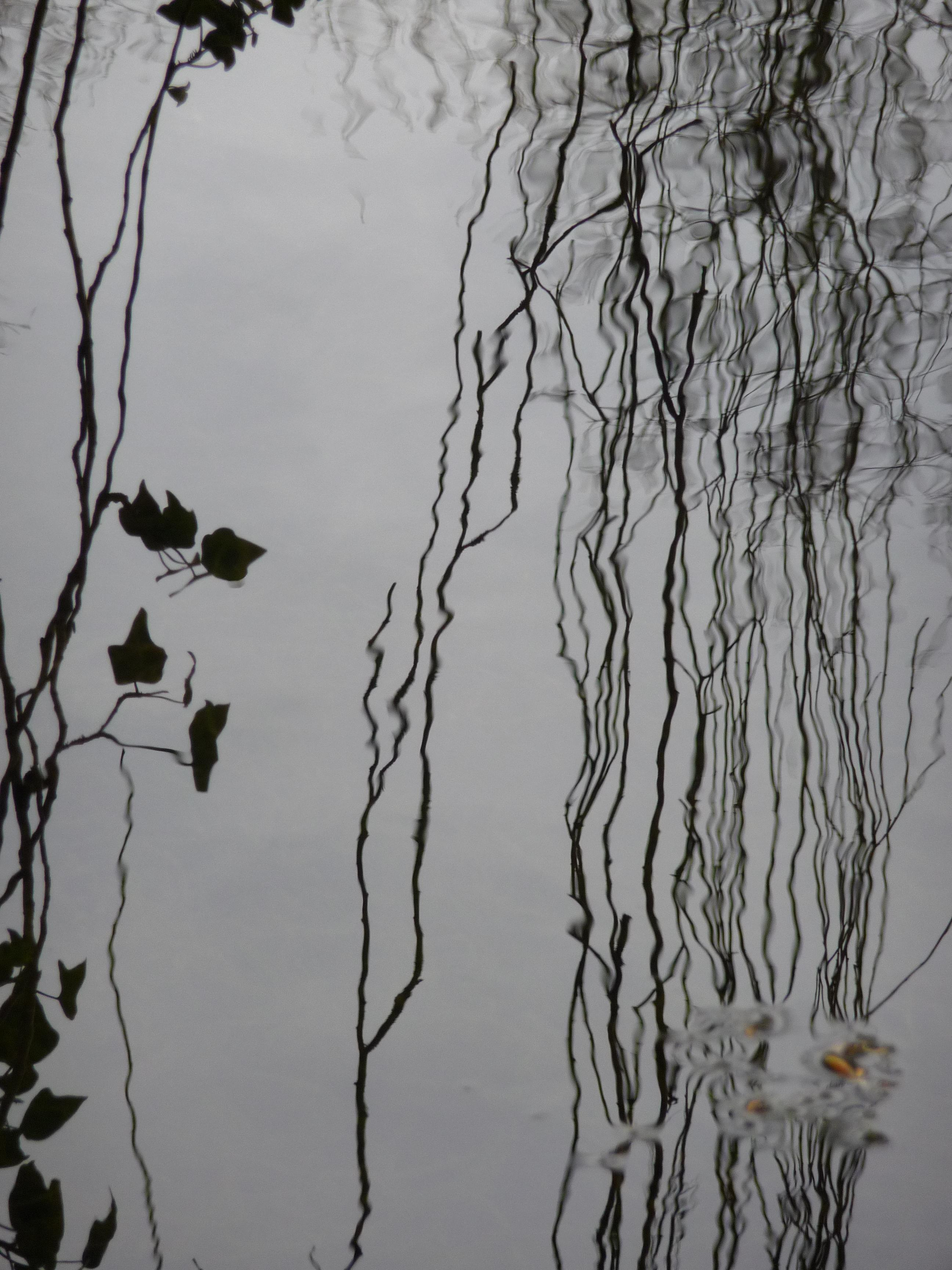 Lines and Ripples, Wild Garden