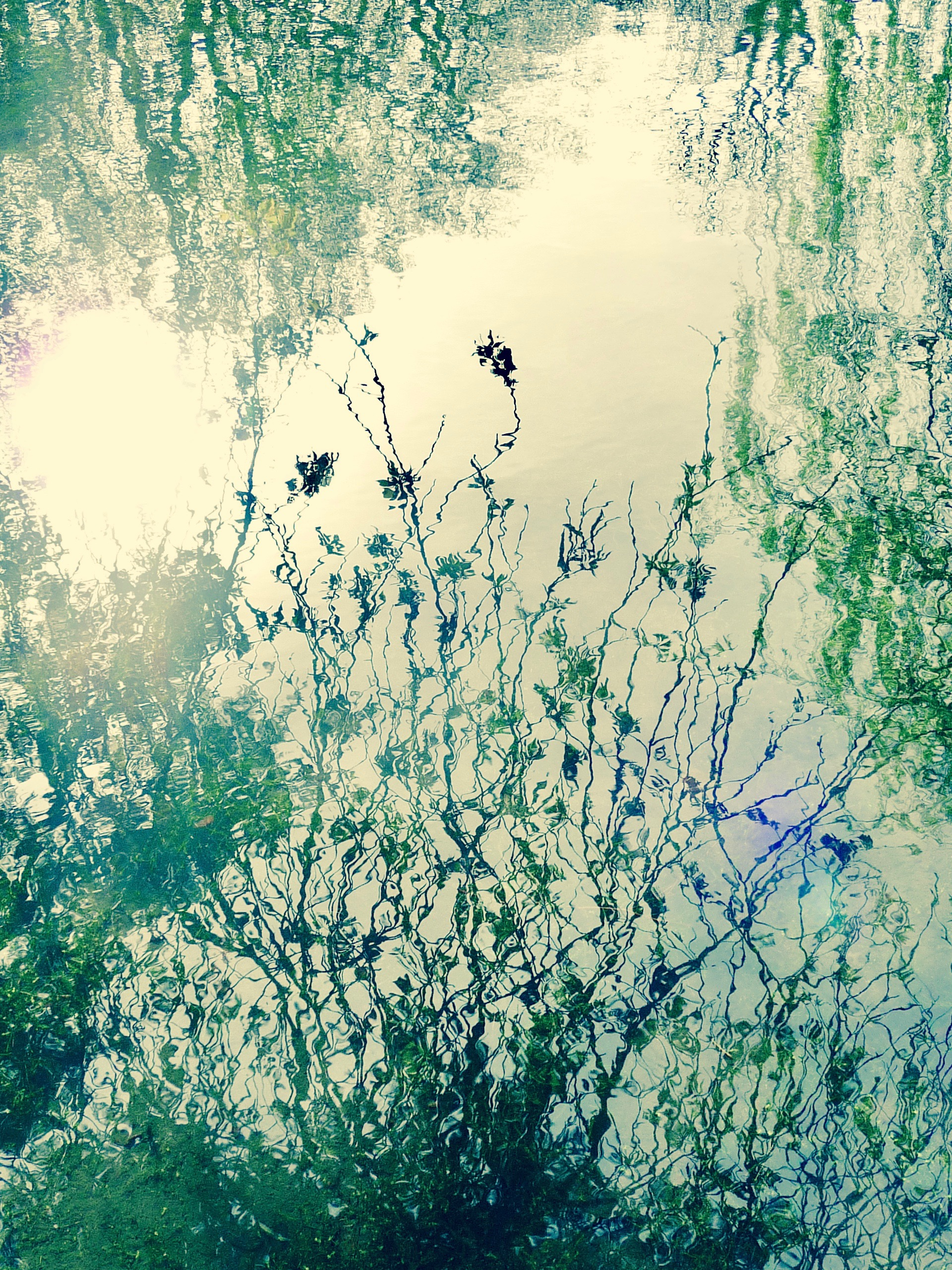 Wild Garden series, reflections