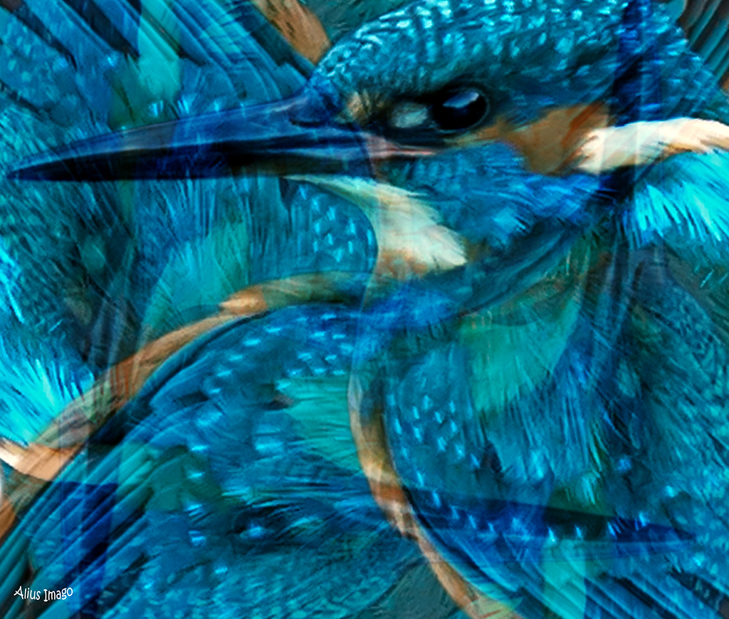 Designs Inspired By Nature: Kingfisher