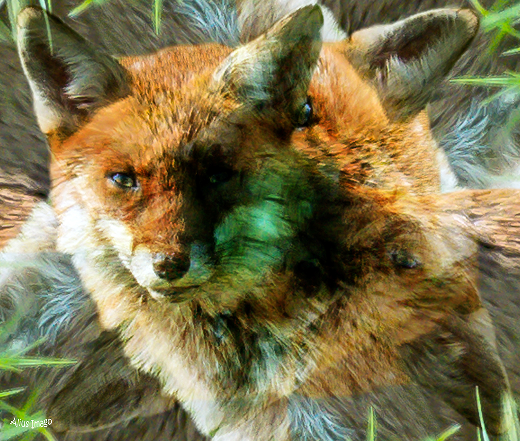 Designs Inspired By Nature:  Red Fox